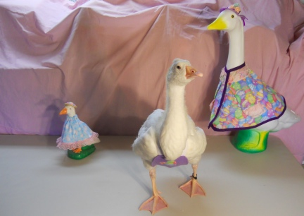 Happy Easter Geese!  2012-04-02